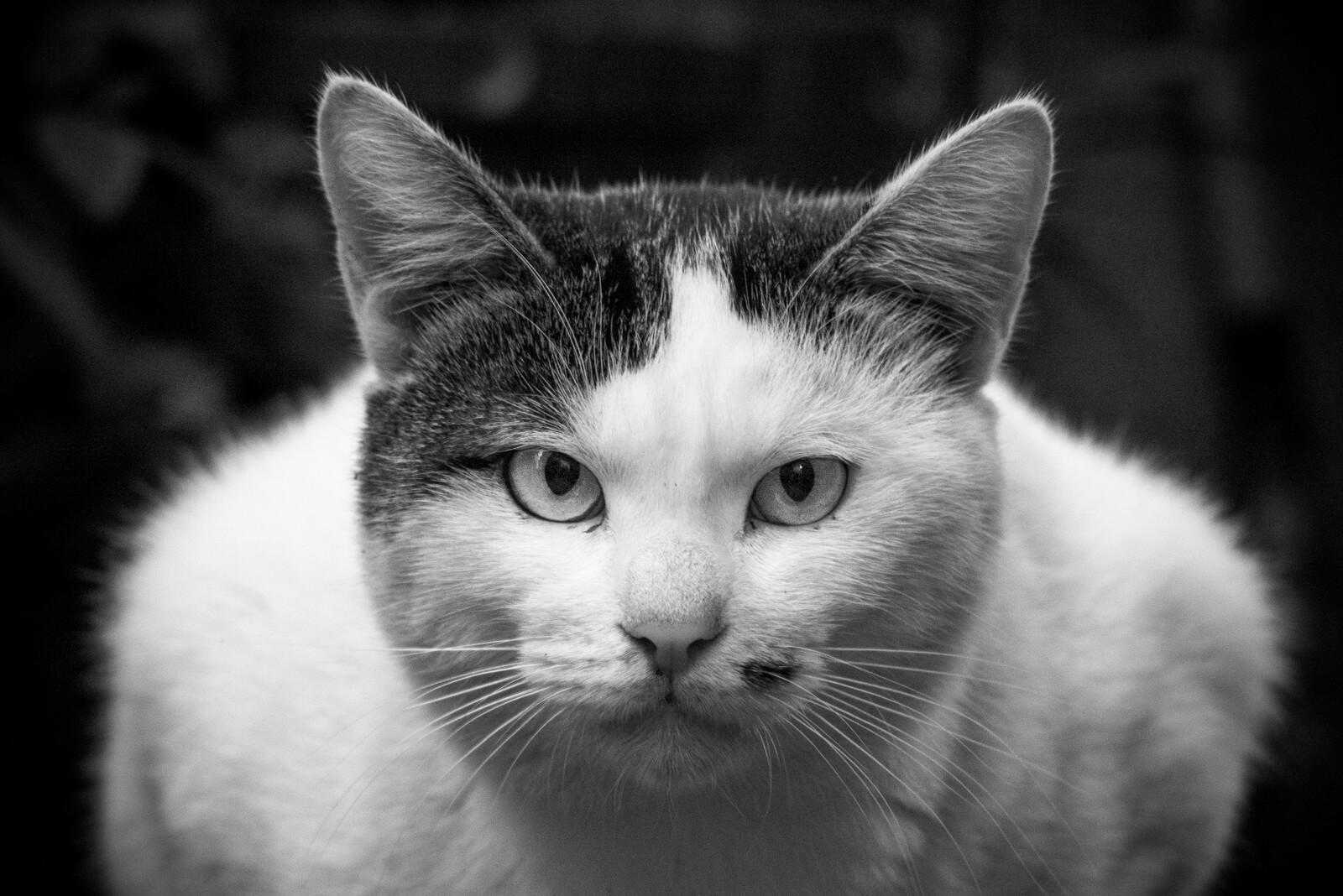営業マンの猫